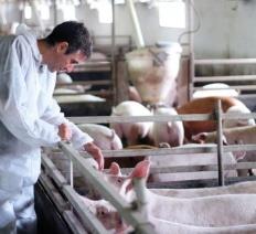 Patto Etico - Animal Welfare e Rispetto per l'ambiente